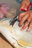 Filettamento del pesce del permesso da dodici libbre Immagini Stock Libere da Diritti