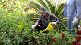 A filha de amor ajuda a água idosa da mãe as flores no jardim video estoque