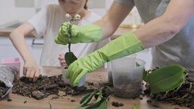 Filha e mãe da criança que plantam orquídeas em uns potenciômetros de flor video estoque