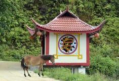 FILHO DE ÁSIA TAILÂNDIA MAE HONG Fotos de Stock