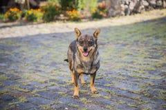 Filhote bonito do cachorrinho do filhote de cachorro do cão exterior na mola Imagens de Stock Royalty Free