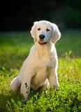 Filhote de cachorro Imagem de Stock Royalty Free