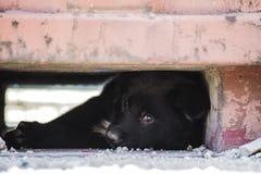 Filhote de cachorro Fotografia de Stock Royalty Free