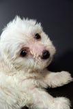 Filhote de cachorro agradável foto de stock