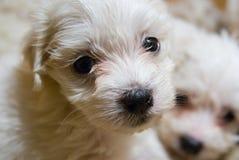 Filhote de cachorro agradável foto de stock royalty free