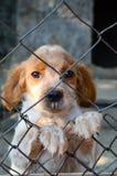 Filhote de cachorro atrás de uma cerca Imagens de Stock Royalty Free