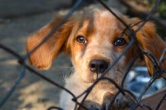 Filhote de cachorro atrás de uma cerca Imagem de Stock