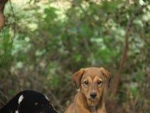 Filhote de cachorro bonito Fotos de Stock Royalty Free