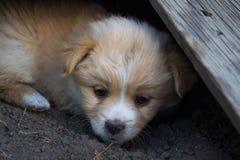 Filhote de cachorro bonito Foto de Stock