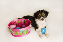 Filhote de cachorro bonito ao lado da cesta de Easter com ovos plásticos Imagem de Stock