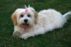 Filhote de cachorro bonito com esfera Foto de Stock