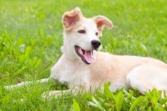 Filhote de cachorro bonito do golden retriever Fotos de Stock Royalty Free