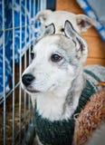 Filhote de cachorro bonito e órfão Fotos de Stock