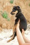Filhote de cachorro nas mãos Fotografia de Stock Royalty Free