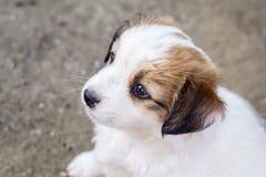 Filhote de cachorro branco Imagem de Stock