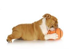 Filhote de cachorro brincalhão Fotografia de Stock