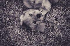 Filhote de cachorro brincalhão imagem de stock