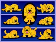 Filhote de cachorro brincalhão de Labrador. Fotos de Stock