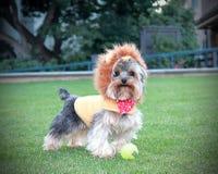 Filhote de cachorro brincalhão do cão Foto de Stock