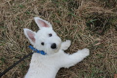 Filhote de cachorro Cão fotos de stock