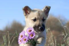 Filhote de cachorro com flores Imagem de Stock Royalty Free