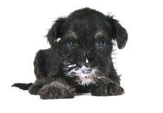 Filhote de cachorro com fome Imagens de Stock