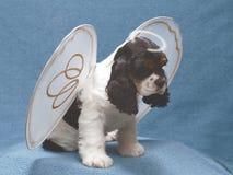 Filhote de cachorro com halo quebrado fotos de stock royalty free