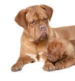 Filhote de cachorro com mum Fotos de Stock