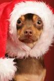Filhote de cachorro com o chapéu de Santa em sua cabeça fotografia de stock royalty free