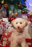 Filhote de cachorro com presentes Imagem de Stock
