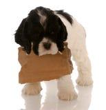 Filhote de cachorro com sinal em branco em torno da garganta fotos de stock royalty free