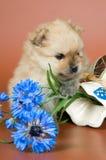 Filhote de cachorro com um vaso Fotografia de Stock Royalty Free