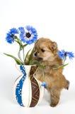 Filhote de cachorro com um vaso Imagem de Stock