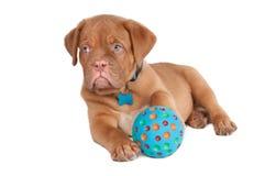 Filhote de cachorro com uma esfera Fotografia de Stock Royalty Free