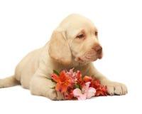 Filhote de cachorro com uma flor. Imagem de Stock Royalty Free