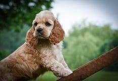 Filhote de cachorro curioso Fotografia de Stock