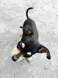 Filhote de cachorro curioso Imagens de Stock