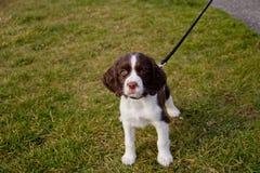 Filhote de cachorro curioso no parque fotos de stock