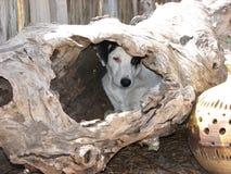Filhote de cachorro da árvore Imagens de Stock