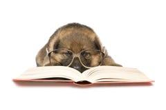 Filhote de cachorro da leitura Fotos de Stock Royalty Free