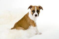 Filhote de cachorro de assento fotografia de stock