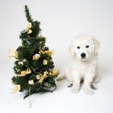 Filhote de cachorro de Christmass Fotos de Stock