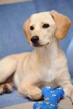 Filhote de cachorro de Labrador imagem de stock