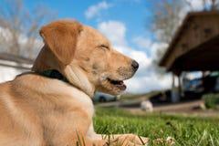 Filhote de cachorro de riso imagens de stock royalty free