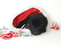 Filhote de cachorro de Santa Fotografia de Stock