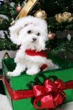 Filhote de cachorro de Santa imagem de stock royalty free