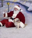 Filhote de cachorro de Santa Fotos de Stock Royalty Free