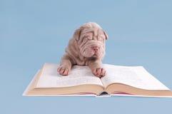 Filhote de cachorro de Shar-pei que lê um livro Foto de Stock Royalty Free