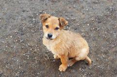 Filhote de cachorro disperso fotos de stock