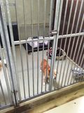 Filhote de cachorro do asilo Foto de Stock Royalty Free